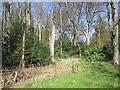 NU0412 : Woodland, Eslington Park by Richard Webb