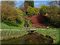TQ3331 : Wakehurst Place: Water gardens by Alan Hunt
