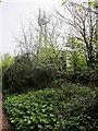 SX9264 : Phone Mast by Cedars Road by Philip Jeffrey