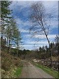 SH6441 : Forestry track near Tan-y-Bwlch by Gareth James