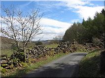 SH6441 : Lane near Tan-y-Bwlch by Gareth James