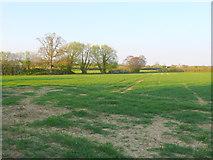 ST4718 : Fields near Stoke sub Hamdon by Nigel Mykura
