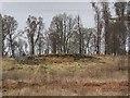 NN8460 : Homestead, Borenich by Richard Webb