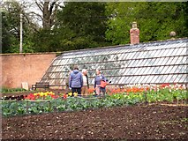 ST5071 : Glass houses and kitchen garden - Tyntesfield by Sarah Smith