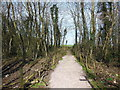 ST7577 : The Cotswold Way in Beacon Lane Plantation by Ian S