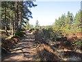 NH9819 : Wide ride, Abernethy Forest by Richard Webb