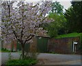 SU9086 : Blossom in front of garages at Hedsor Priory by Shazz