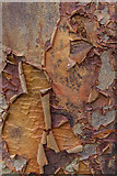 TL7835 : Bark, Castle Hedingham, Colne Valley, Essex by Christine Matthews