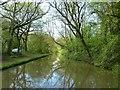 SP4578 : Oxford Canal through woodland near Hungerfield by Rob Farrow