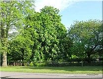 SU4212 : Park north of New Road by Alex McGregor