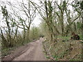 SP0529 : The Cotswold Way in Hailes Wood by Ian S