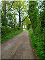 SU9784 : Bridleway on Richman's Hill by Shazz