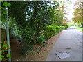 SU9683 : Footpath goes south from Farnham Park Lane by Shazz