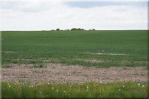 SU5557 : Site of former Roam Road by Sandy B