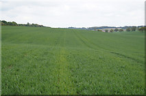 SU5557 : Cereal crop alongside the A339 by Sandy B