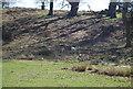 TQ5454 : Deer, Knole Park by N Chadwick
