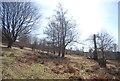 TQ5454 : Knole Park by N Chadwick