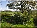 ST2604 : Gate and track, Furley by Derek Harper