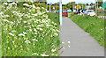 J5281 : Spring verge, Bangor by Albert Bridge