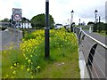 H4572 : Yellow weeds, Irishtown, Omagh by Kenneth  Allen