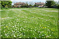 SO8642 : Play area of daisies by Philip Halling
