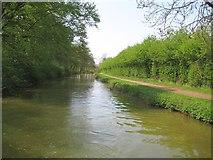 SP7289 : Grand Union Canal: Market Harborough Arm by Nigel Cox