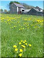 SK1173 : Farm buildings and dandelions north of Flag Dale by Neil Theasby