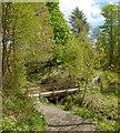 NS2883 : Footbridge in Duchess Wood by Lairich Rig