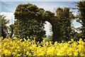 SK9586 : Folly gateway by Richard Croft