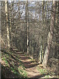 NY9449 : Path in woodland near Derwent Head by Mike Quinn