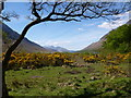 NN1145 : Gorse at the head of Loch Etive by Alan O'Dowd