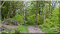 SD6527 : A path in Billinge Wood by Ian Greig
