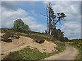 SU9053 : Scarp Hill by Alan Hunt