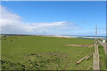 NU1535 : Farmland at Budle Bay by Billy McCrorie