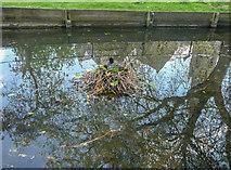 TQ3296 : Coot's Nest, New River Loop, Church Street, Enfield by Christine Matthews