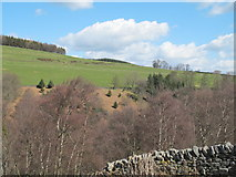NY9449 : The valley of Beldon Burn northeast of Gibraltar by Mike Quinn