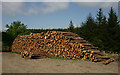 SD3495 : Log Pile in Grizedale Forest by Peter Trimming
