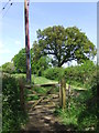 TQ3517 : Footpath near Plumpton, Sussex by Malc McDonald