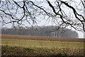TR0551 : Woodland on the North Downs by N Chadwick