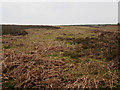 NU0927 : Young bracken plants on Sandyford Moor by Graham Robson