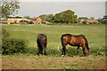 SK8857 : Stapleford horses by Richard Croft