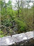 NG5536 : Looking downstream on the Inverarish Burn by Gordon Brown