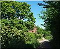 SK6149 : Calverton NG14, Notts. by David Hallam-Jones