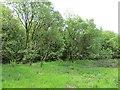 NS5971 : Wilderness Plantation by Richard Webb