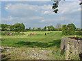 SU8279 : Fields, Knowl Hill by Alan Hunt