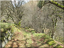 NY9449 : Path in woodland at Gibraltar Banks by Mike Quinn