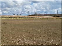 NZ0367 : Farmland on Carrs Fell and Carrsfell Plantation (2) by Mike Quinn