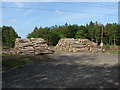 SU9063 : Swinley Forest log piles by Alan Hunt
