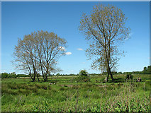 TM4592 : Alders by drainage ditch, Aldeby by Evelyn Simak