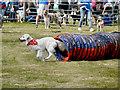 SD6342 : Dog Agility Trials, Chipping Steam Fair by David Dixon
